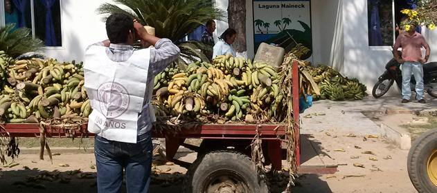 productores-banana-631-280-631-1730622225258